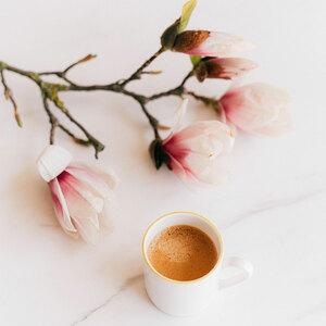 Accueillir le #printemps autour d'un bon #café, c'est possible ! 🌷🌱 🌼 Les boutiques #Malongo de #Nice et #Paris sont ouvertes à la vente et aux boissons à emporter. Retrouvez les adresses sur notre site. #CafesMalongo #Coffee #CommerceEquitable #Bio