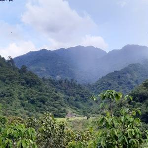 #Malongo collabore avec trois coopératives au Mexique dont les parcelles sont situées dans la zone tampon d'El Triunfo. Ces plantations sous ombrage participent à sa préservation, favorisant notamment la circulation des espèces. #CafesMalongo #Café #Coffee #CommerceEquitable #Fairtrade #Mexique