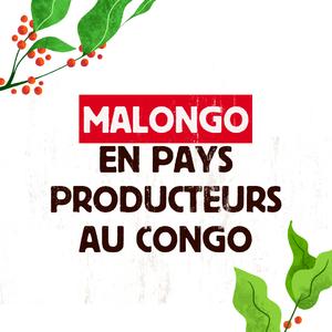 #Malongo s'engage auprès des coopératives du Parc National des Virunga au Congo, dernier refuge des gorilles de Montagne, dans un programme qui repose sur l'accompagnement des producteurs et la préservation de la biodiversité. L'Union Européenne soutient également ce programme qui vise à améliorer les conditions de vie de ces producteurs qui cultivent un arabica de très haute qualité au sein d'un environnement réputé pour sa biodiversité. Pour mener au mieux ce dernier, différentes étapes ont été faites comme la certification du #CommerceEquitable ou encore la mise en place d'un prix minimum. Aujourd'hui, les coopératives Kawa Kanzuru et Coopade regroupent plus de 6 000 membres dont 2 000 femmes. #CafesMalongo #Cafe #Coffee #MaxHavelaar #QuinzaineDuCommerceEquitable @quinzaine_commerce_equitable