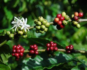 Le saviez-vous ? #Malongo importe 22 origines de café bio pour lesquelles une prime Agriculture Biologique est reversée. Protéger les terres et les paysans allant de pair, tous les cafés bio de Malongo sont également équitables ! A travers son pilier environnemental, le label @MaxHavelaarFrance met un point d'honneur au respect de la planète sur le long terme. #CafesMalongo #Cafe #CommerceEquitable #Environnement