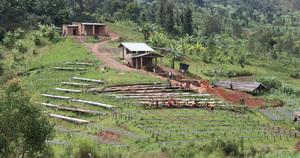 #Malongo défend dans la ville de Kayanza, la production d'un arabica bourbon où travaillent 1 345 producteurs. Depuis 2011, Malongo a d'ailleurs acheté 83 tonnes de café, des crus de qualité conçus à partir de cerises cueillies uniquement à la main. #CafesMalongo #Cafe #Coffee #Burundi