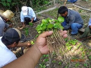 Un exemple d'engagement de la Fondation #Malongo : le soutien aux producteurs d'UCIRI, la coopérative fondatrice du label @maxhavelaarfrance. En proie à une situation économique difficile notamment due à l'épidémie de rouille du caféier et au séisme qui toucha durement le Mexique, la coopérative a pu compter il y a quelques années sur le soutien financier de la Fondation Malongo permettant notamment la replantation de caféiers.  #CafésMalongo #Café #Coffee #CommerceEquitable #MaxHaavelar #FairTrade