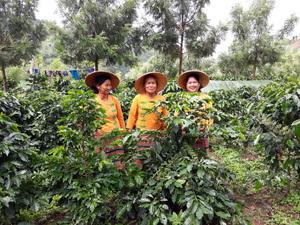 Malongo est très fier d'annoncer la certification équitable du café du Myanmar produit au sein des montagnes Shan. Cette distinction est le fruit d'un ambitieux programme visant à substituer la culture du pavot par celle du café. Le label Max Havelaar apparait désormais sur nos cafés du Myanmar en grains et en doses... et bientôt sur nos boites de café moulu. #coffee #CafesMalongo #FairTrade #commerceequitable #cafe