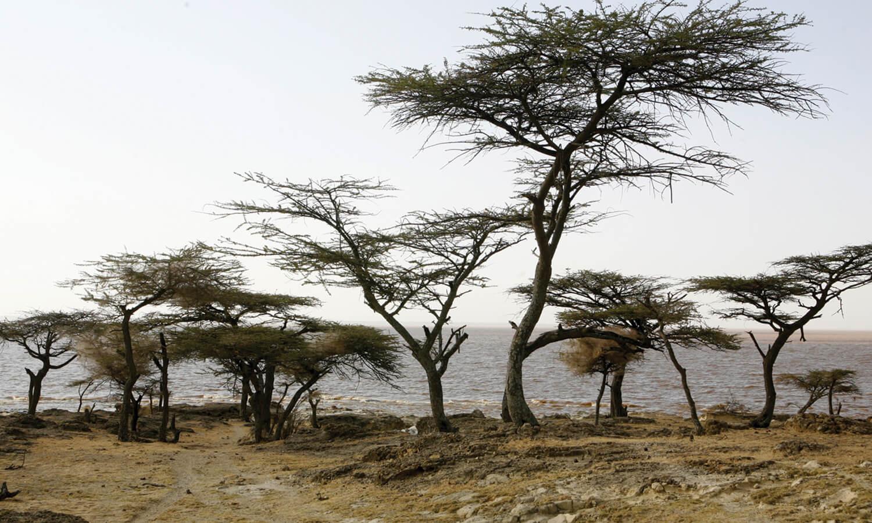 bandeau ethiopie 1500×900