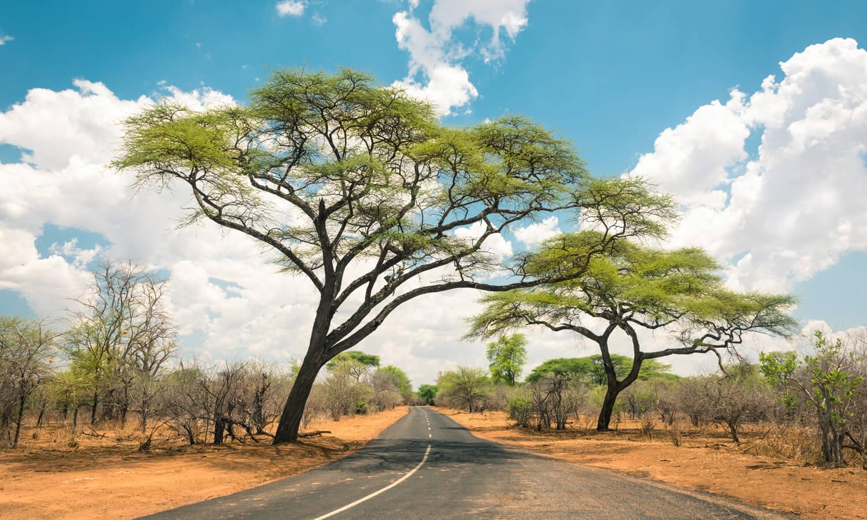 bandeau zimbabwe1500x900