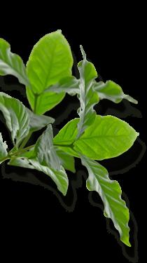 feuilles-1-1