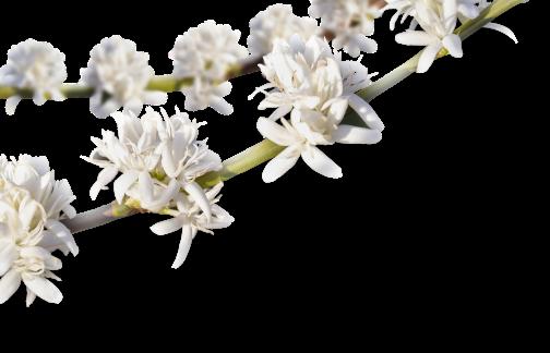 rameau-fleurs@2x